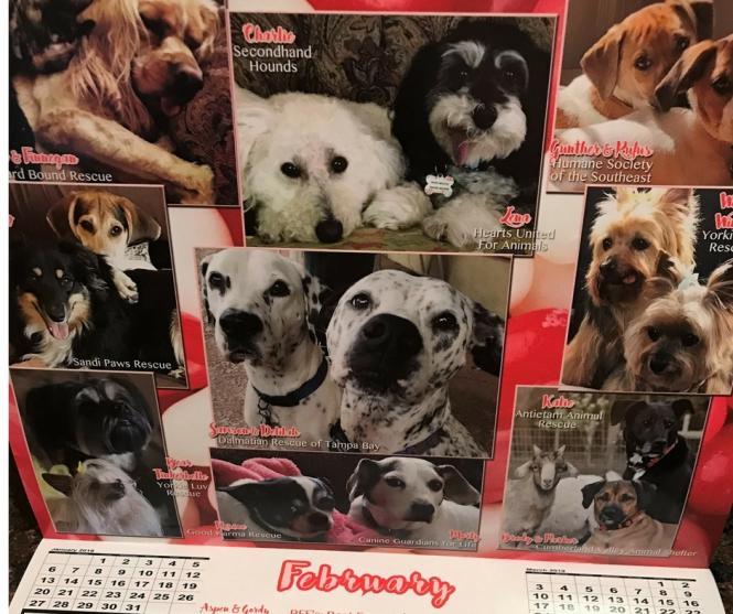 calendar pups